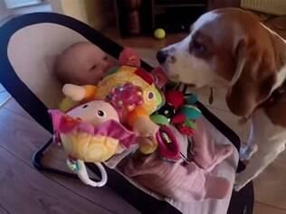 Vídeo mostra cão tentando se desculpar por pegar brinquedo de bebê.