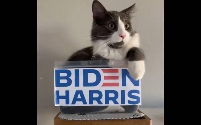 Em vídeo, gatinhos fazem campanha para Biden