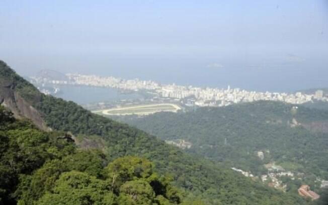 Dos 17 estados brasileiros ocupados pela Mata Atlântica, nove apresentaram regeneração do bioma nos últimos 30 anos
