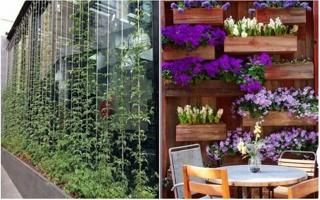 Ao montar um jardim vertical, é preciso escolher bem a localização e as plantas que serão usadas