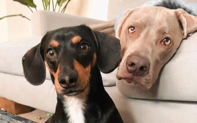 Frank (esq.) foi adotado para ajudar Arnold (dir.) a superar a ansiedade