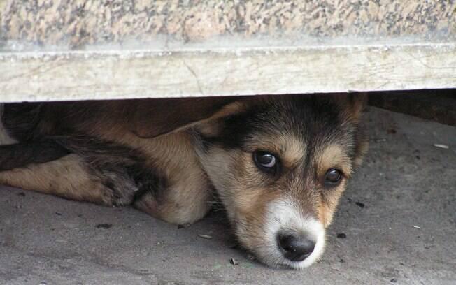 Muitos donos sofrem com um cachorro medroso e ficam sem saber o que fazer