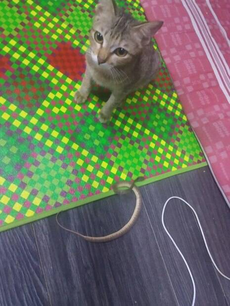 gato e cobra