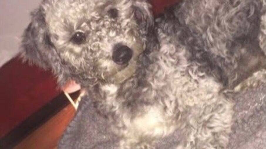 Mesmo identificado com microchip, cachorro é dado para uma nova família