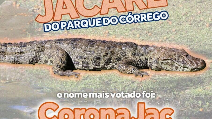 Jacaré foi batizado com nome em alusão à vacina CoronaVac e fala de Bolsonaro