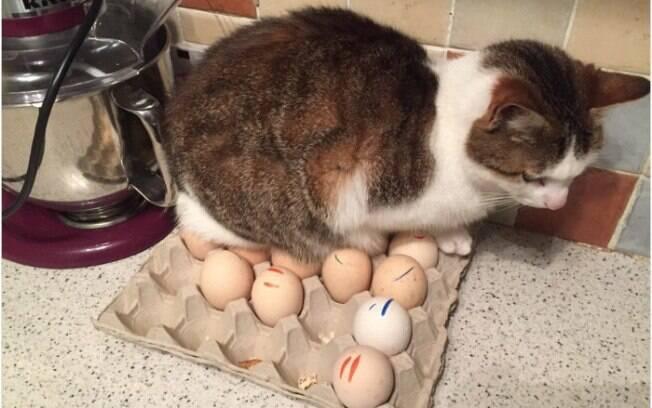 Essa fotos vão provar o quanto os gatos podem ser travessos e ardilosos