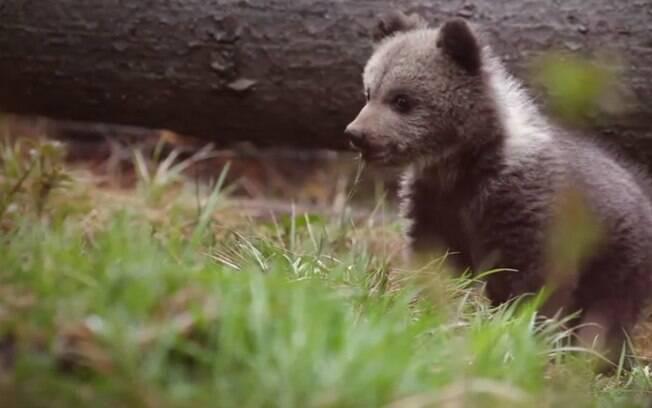 Vídeos mostram cotidiano dos ursos resgatados