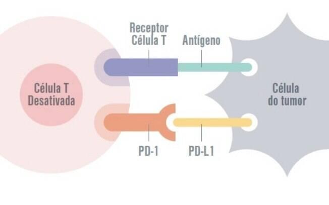 Ligando-se ao Linfócito T por receptor específico (PDL1), a célula do tumor consegue a resposta imune