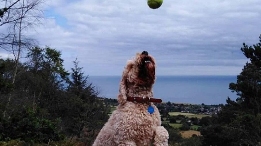 Condicionar o cão a não se levar por distrações do ambiente faz parte do treinamento