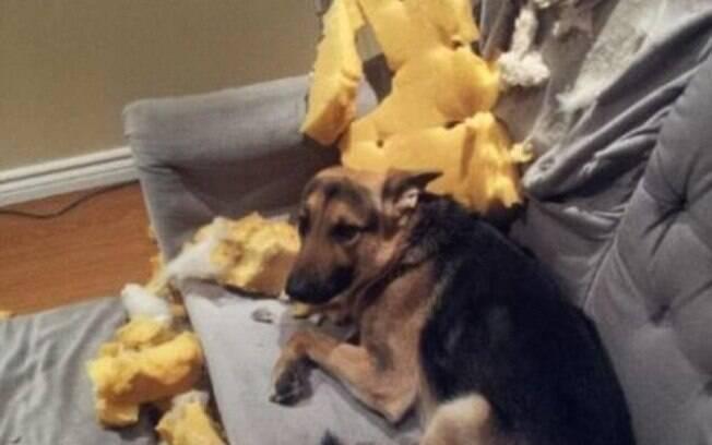 Já imaginou voltar para casa e encontrar seu sofá assim?
