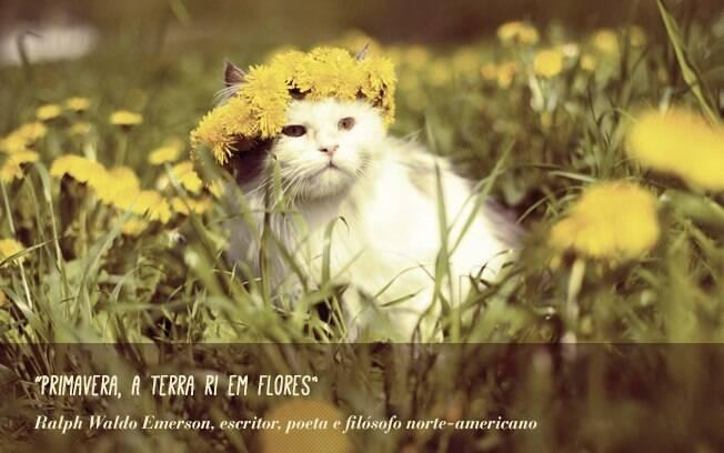 25 Frases De Primavera Comportamento Ig