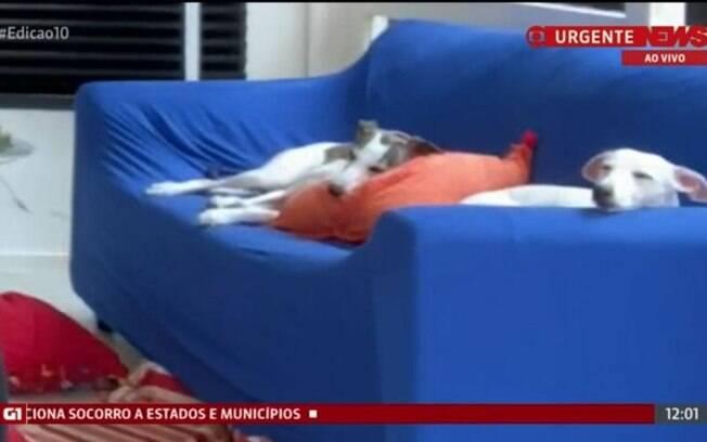 Cadelas do jornalista Roberto Burnier aparecem em transmissão da Globonews