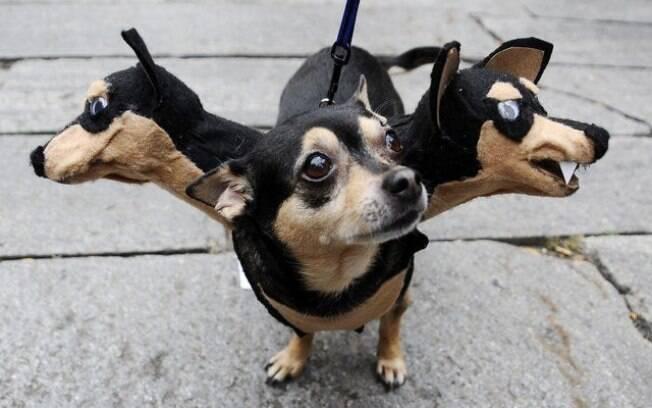 Vários cachorros engraçados de uma vez, só que não