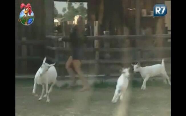 Raquel tenta levar as cabras para pastar. Como de costume, elas não obedecem
