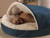 Como acostumar o animal de estimação a dormir na cama comprada para ele