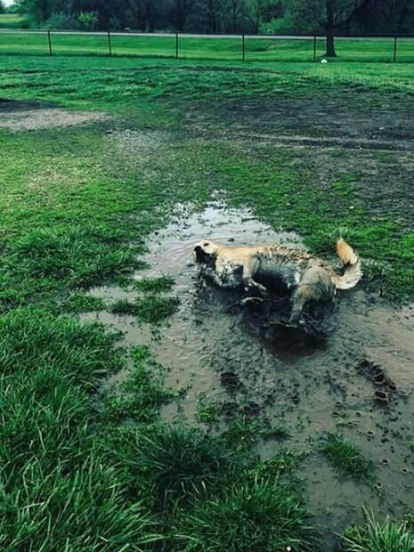 Lindas fotos de cachorros que estão se divertindo demais na lama!