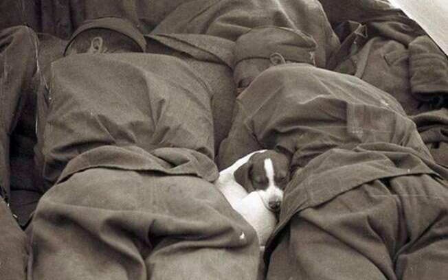 Um cachorro dormindo numa boa entre os soldados.