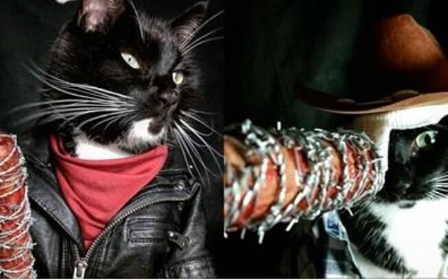 Gatos se vestindo como vários personagens da nossa cultura pop.