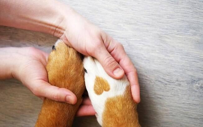 3 orações para abençoar o seu pet
