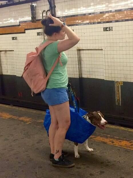 Cachorro dentro de bolsa
