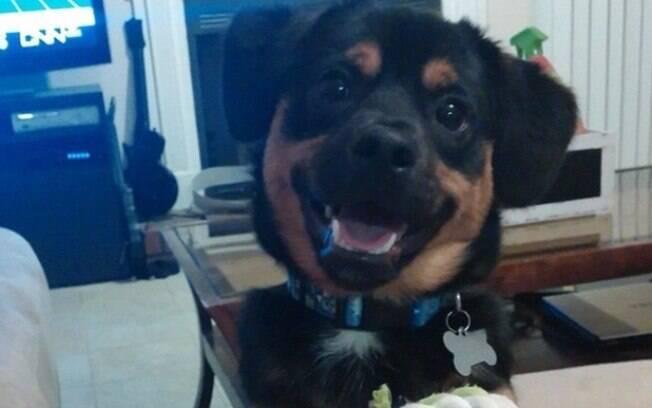 Mais um cachorro sorrindo.