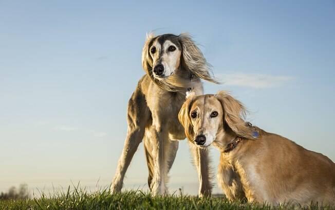Esses são os cachorros mais caros do mundo