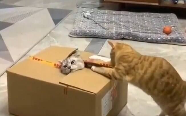Liberte o gatinho! Gato viraliza ao tentar