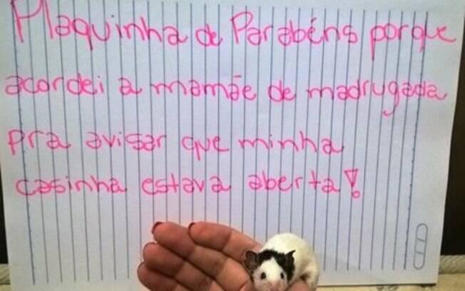 Um hamster sempre alerta.