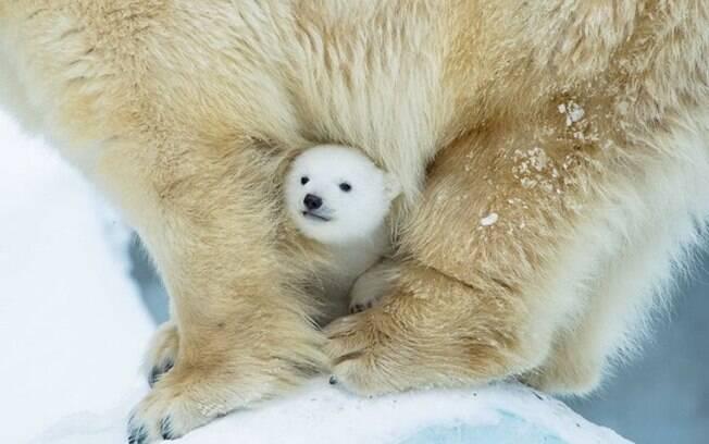 Protegendo o bebezinho entre as pernas
