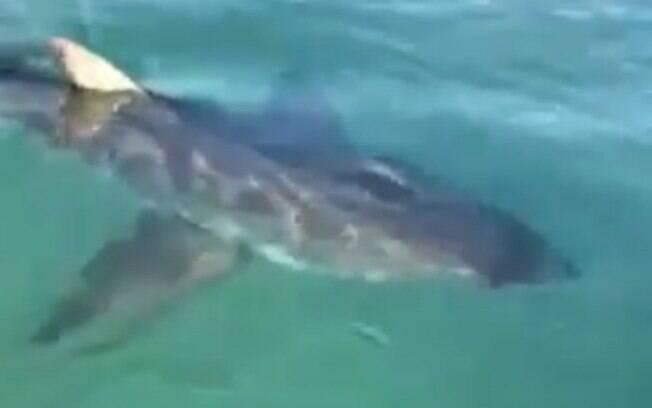 Animal foi devolvido ao mar.
