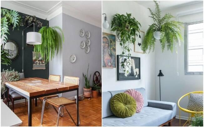 As plantas suspensas combinam com a decoração de salas