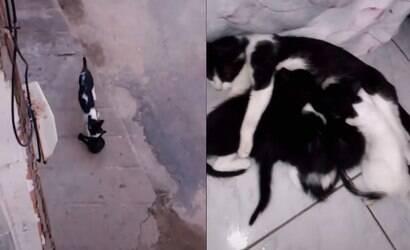 """Gata """"presenteia"""" rapaz que a alimentou com seus filhotes"""