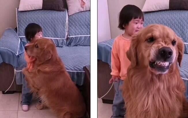Cachorro protege criança após bronca da mãe
