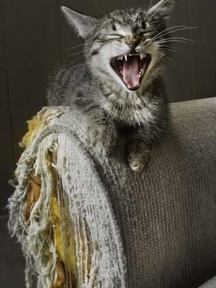 Alguns gatos que tem a mania de arranhar acabam se tornando destruidores