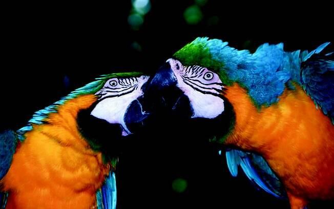 O visitante pode ver papagaios selvagens de perto