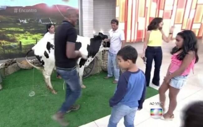 Vaca faz xixi ao vivo no Encontro
