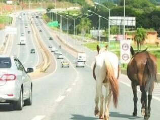 Cavalos oferecem risco aos motoristas que usam a Linha Verde