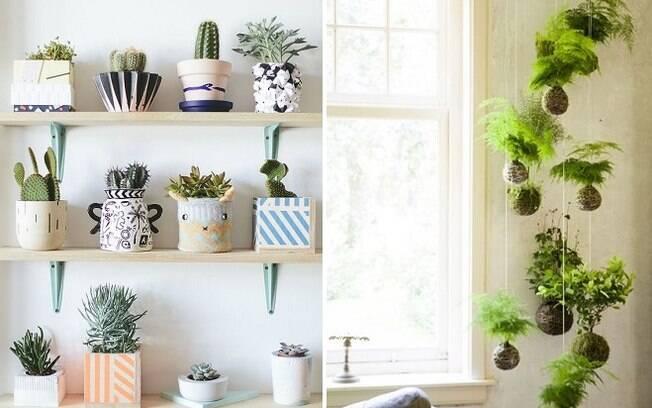 Além dos terrários, também é possível expor as plantas em prateleiras ou em um jardim suspenso