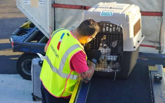 O animal pode viajar na cabine do avião junto com o dono ou em uma área especial do compartimento de cargas da aeronave