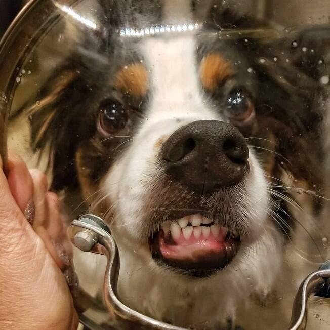 Cão fazendo careta em vidro