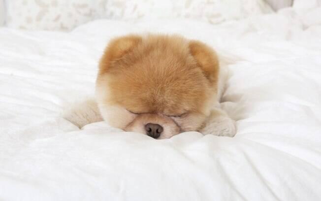 Dormir até tarde é um hábito que Boo tem - e procura em uma companheira