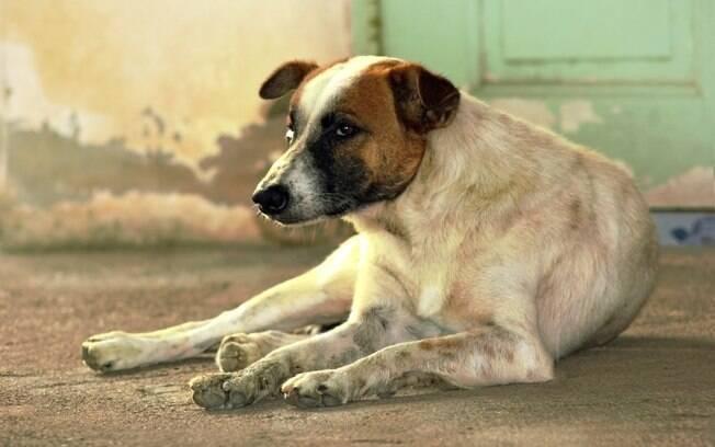 Antes de resgatar um cachorro de rua tenha certeza de que tem condições de cuidar dele