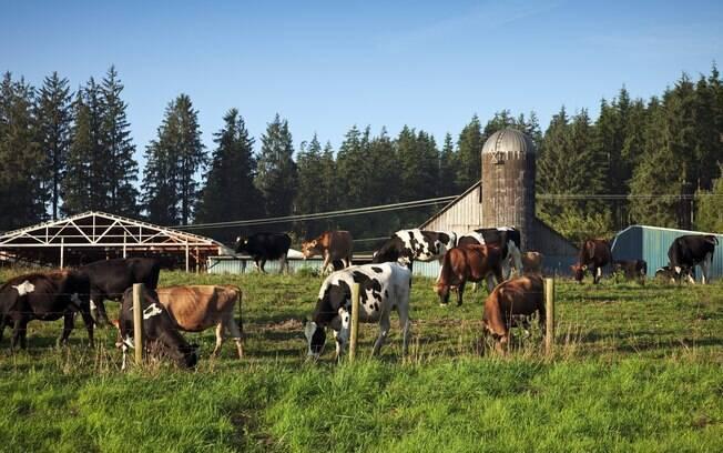 Em Tillamook, nos Estados Unidos, o turismo gastronômico é forte por conta de uma fábrica que produz laticínios