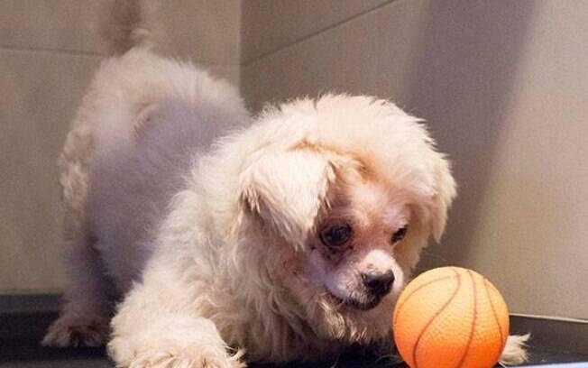 Cão abandonado nas ruas foi atacado por outro cachorro e não conseguiu se defender