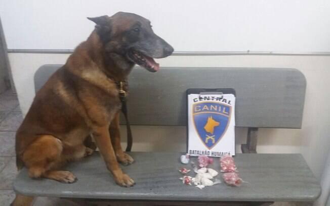 O cão Anubis realizou buscas em alguns quartos que estavam abertos e em um deles localizou drogas