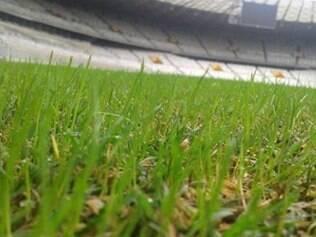 Minas Arena plantou uma grama chamada de inverno no Mineirão