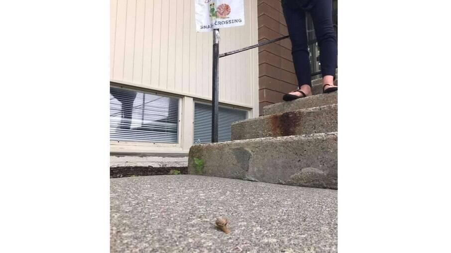 As pessoas passaram a tomar mais cuidado com os pequenos animais