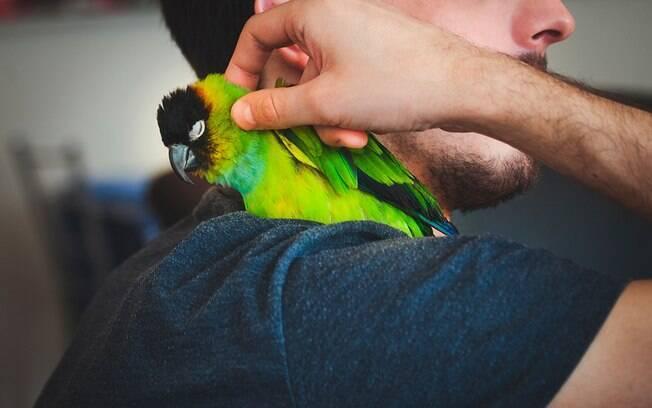 Papagaios são aves muitos sensíveis e necessitam de atenção constante.