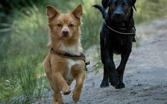 Estopinha dá dicas para evitar a fuga dos cães