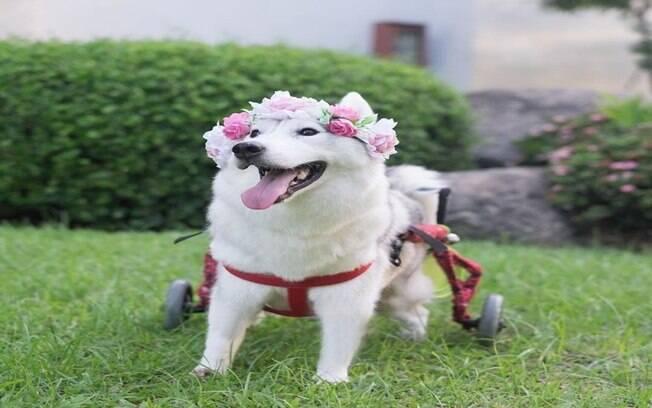 Maya sendo um cachorro muito feliz
